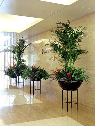 Indoor Plants Will Warm Your Office Interior And Invite Your Guests Inside.  O2plantscapesu0027 Experienced Team Can Help You Select The Proper Plants For  Your ...